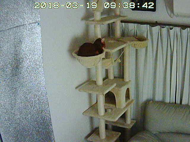朝寝するアビのすけ。