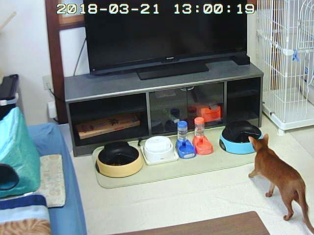 猫たちの昼ご飯の風景。
