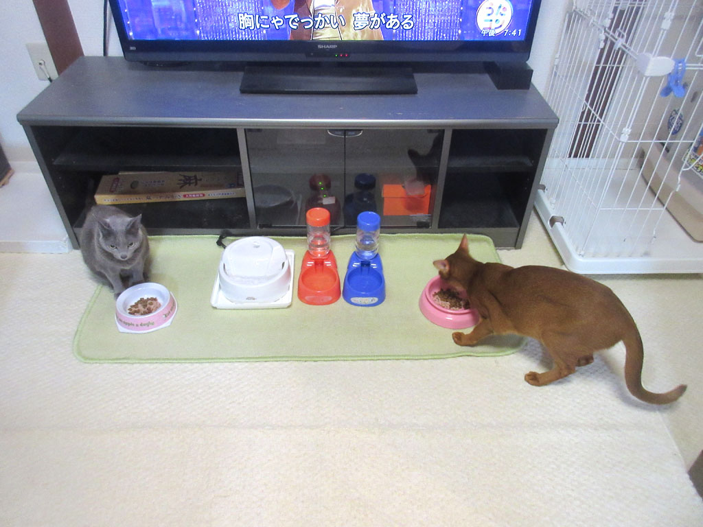帰国した晩の猫たちの晩ご飯。