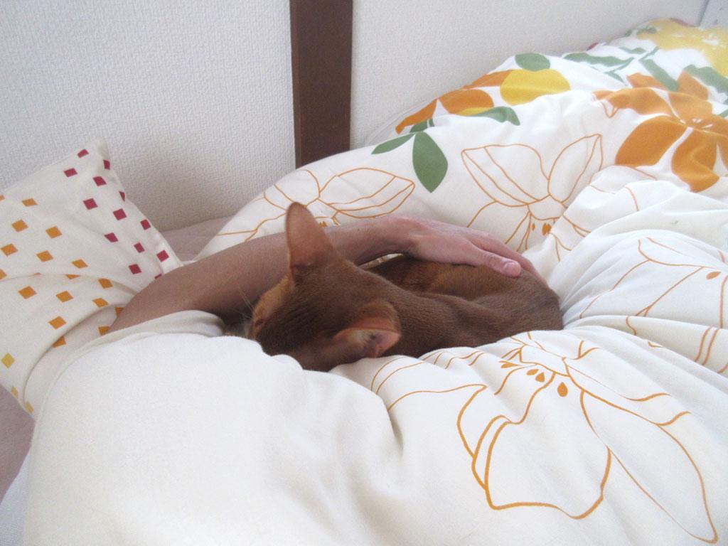 昼寝をしていたアビのすけ君。
