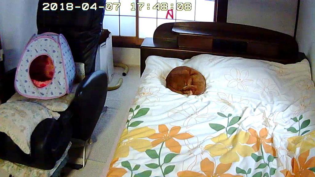 お昼寝するアビのすけ。