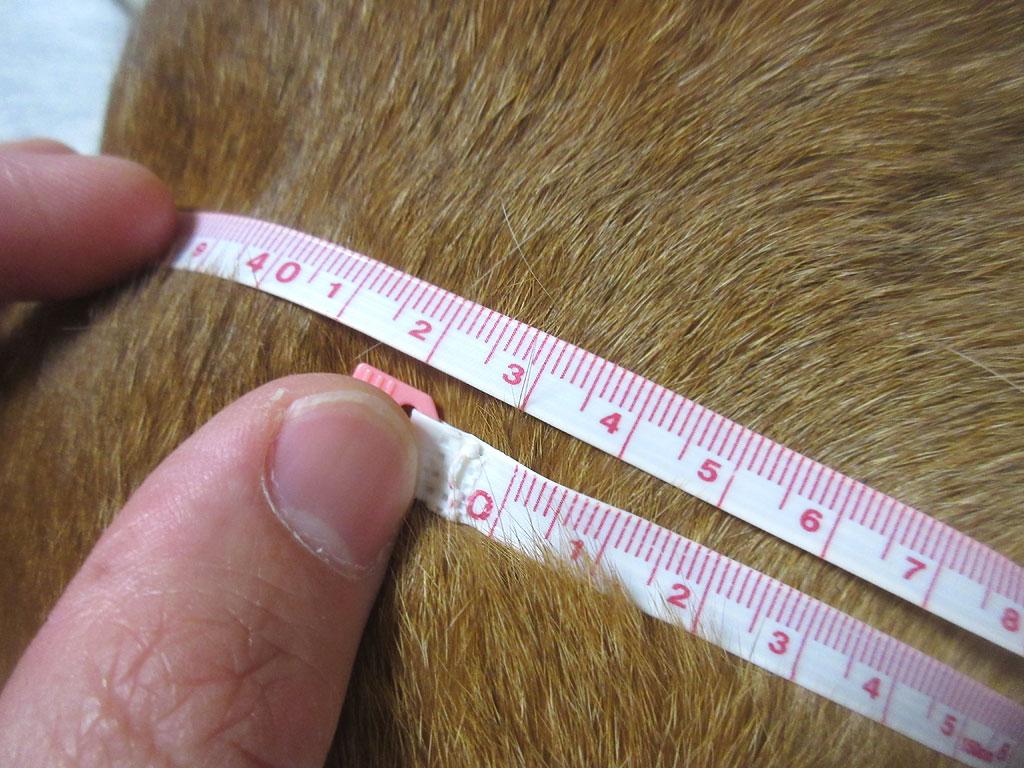 第9肋骨回りは測りにくい。
