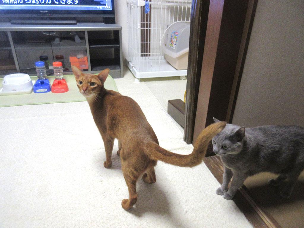 晩ご飯前の我が家の猫たち。