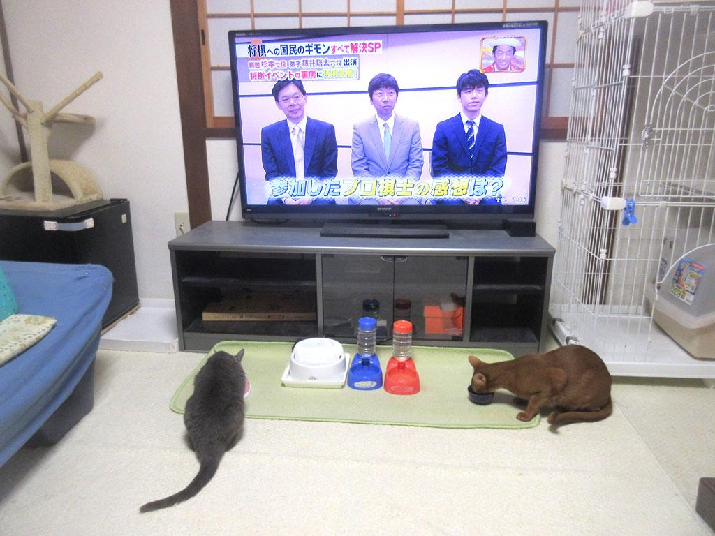 晩ご飯を食べる猫たち。