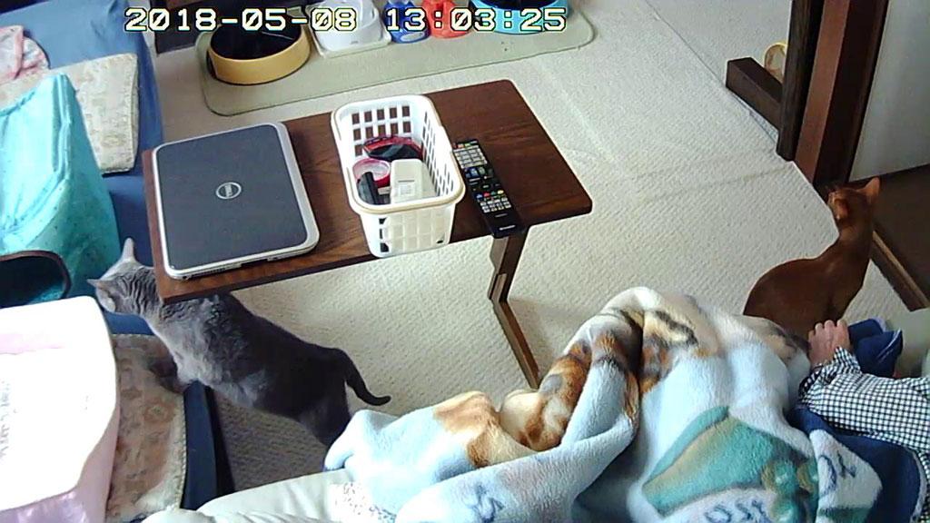 元気な我が家の猫たち。