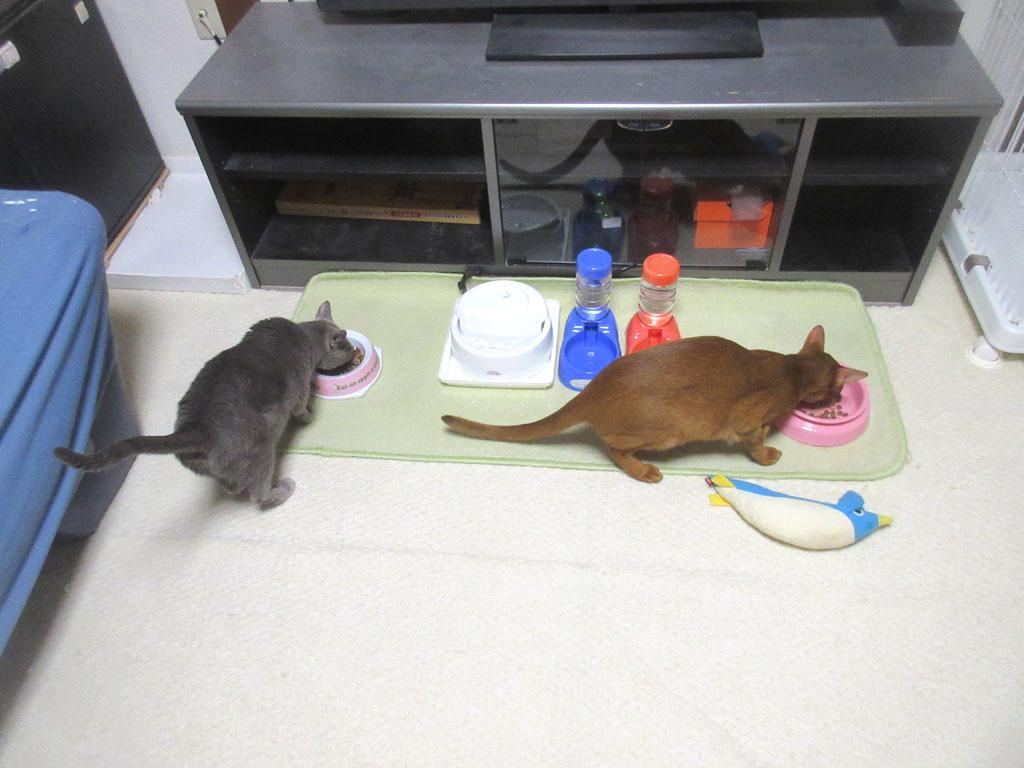 我が家の猫たちのご飯の風景。