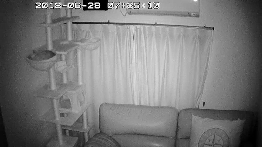 にゃんモックで寝ていたアビのすけ。