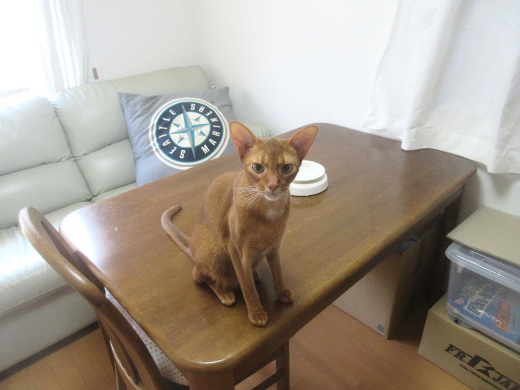 朝ご飯待ちのアビのすけ君。