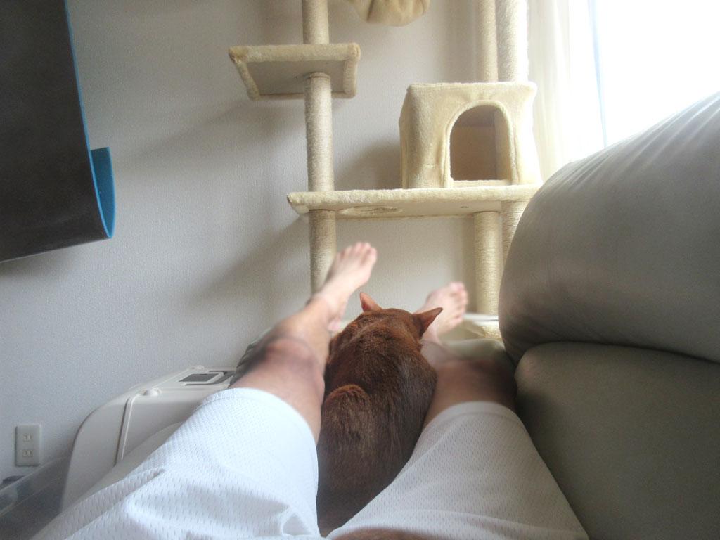 私の足の間で寝るアビのすけ。