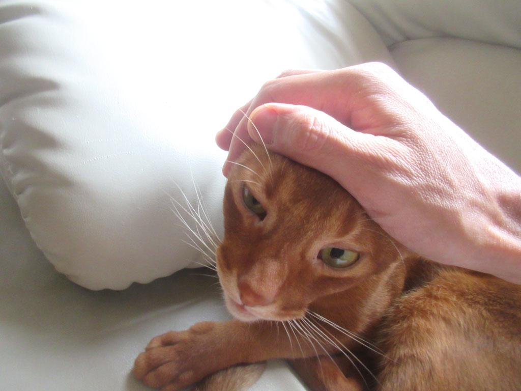 つくづく、人間大好きな猫。