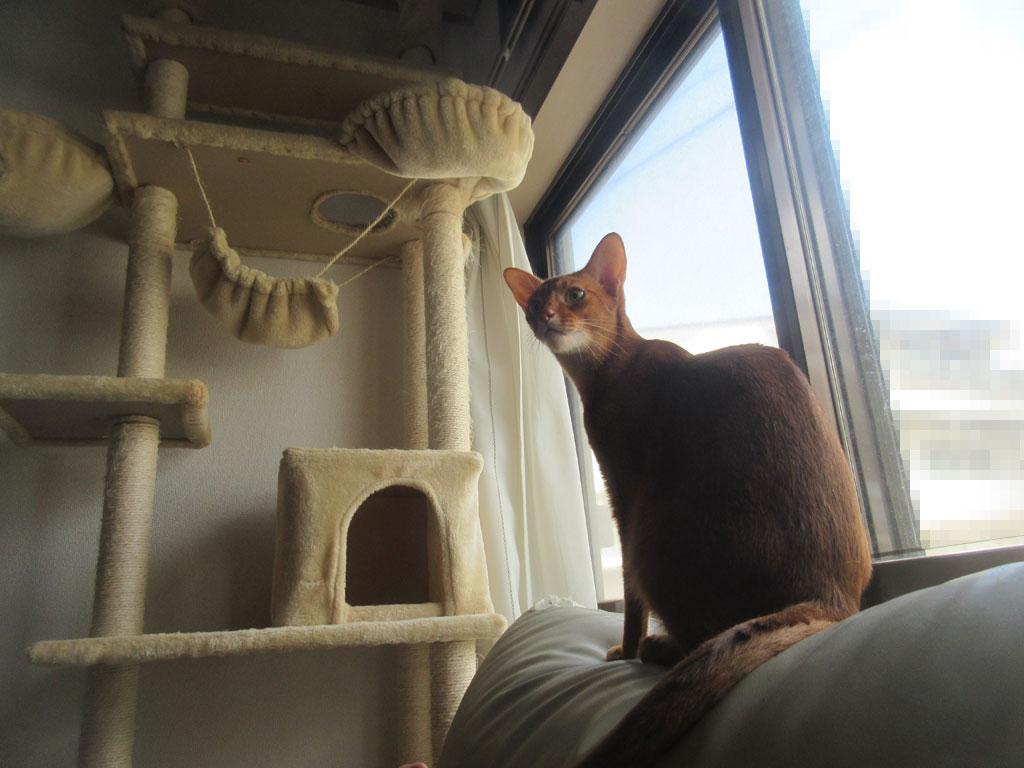 超・猫背のアビのすけ君。
