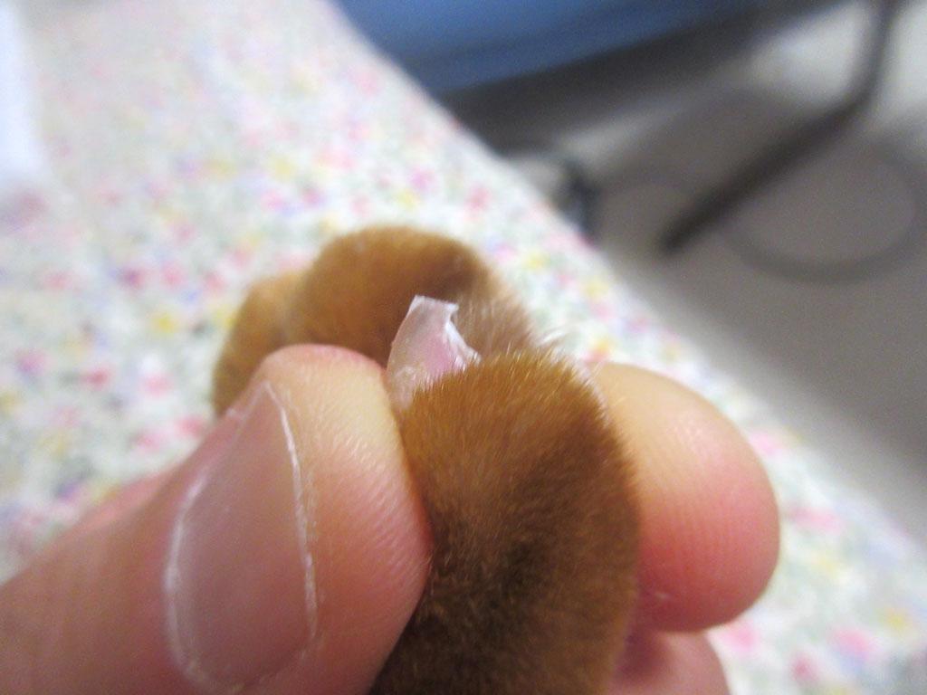 アビのすけの爪切り後。