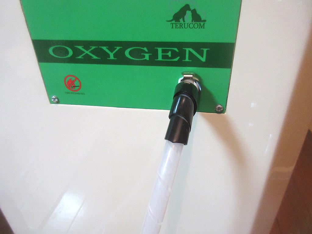 酸素室を再セッティング。