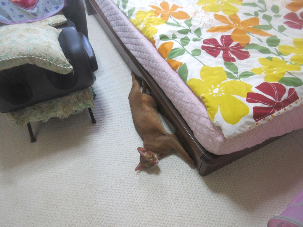 2階で寝ていたアビのすけ君。