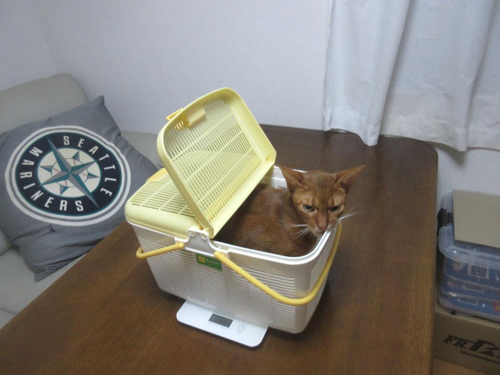 体重測定後のアビのすけ。