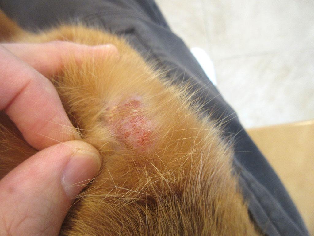 右膝にも皮膚炎が。