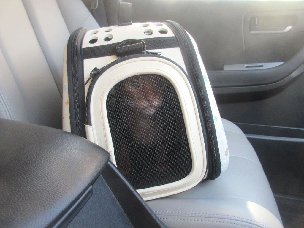 車の中のアビのすけ君。