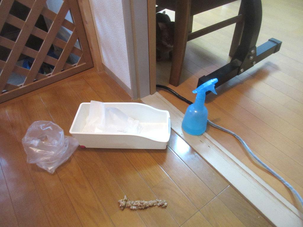 掃除を開始。