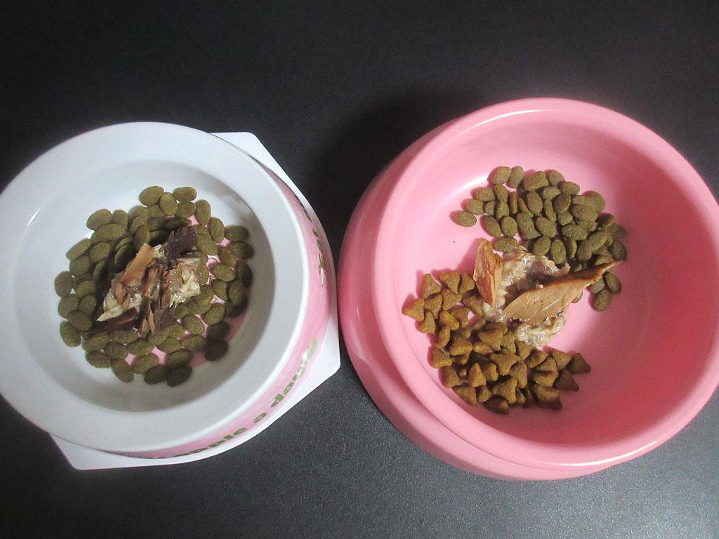 今晩の猫たちのスペシャルご飯。