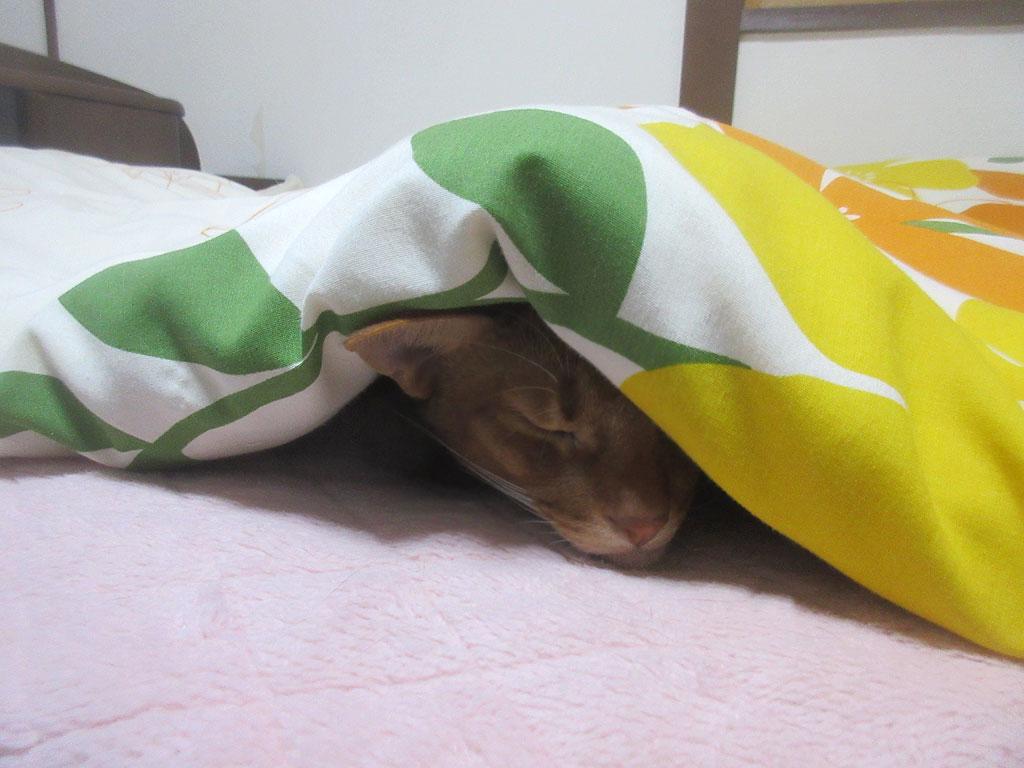 寝てしまったアビのすけ。