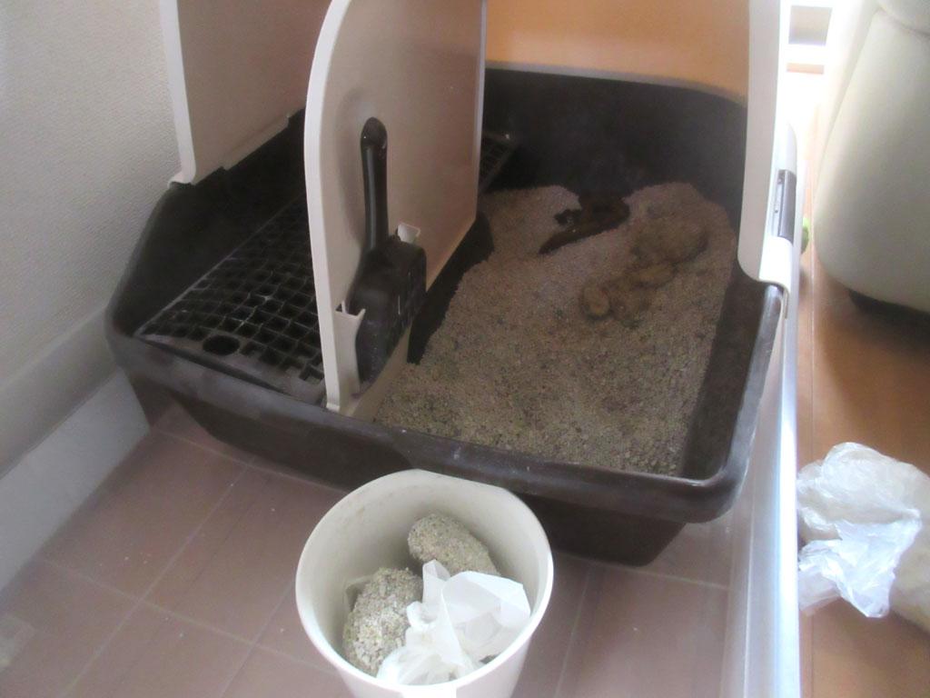 おとといの朝の猫トイレ。