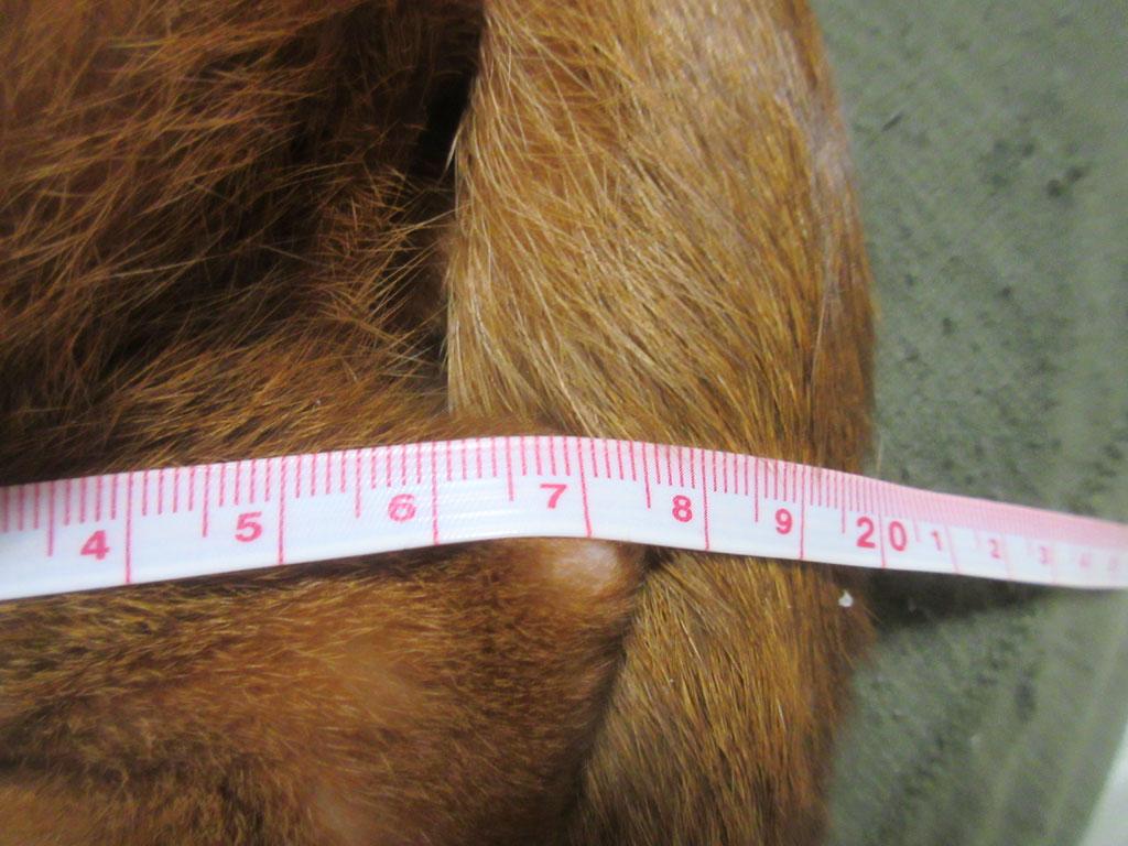 足の長さは17cm。