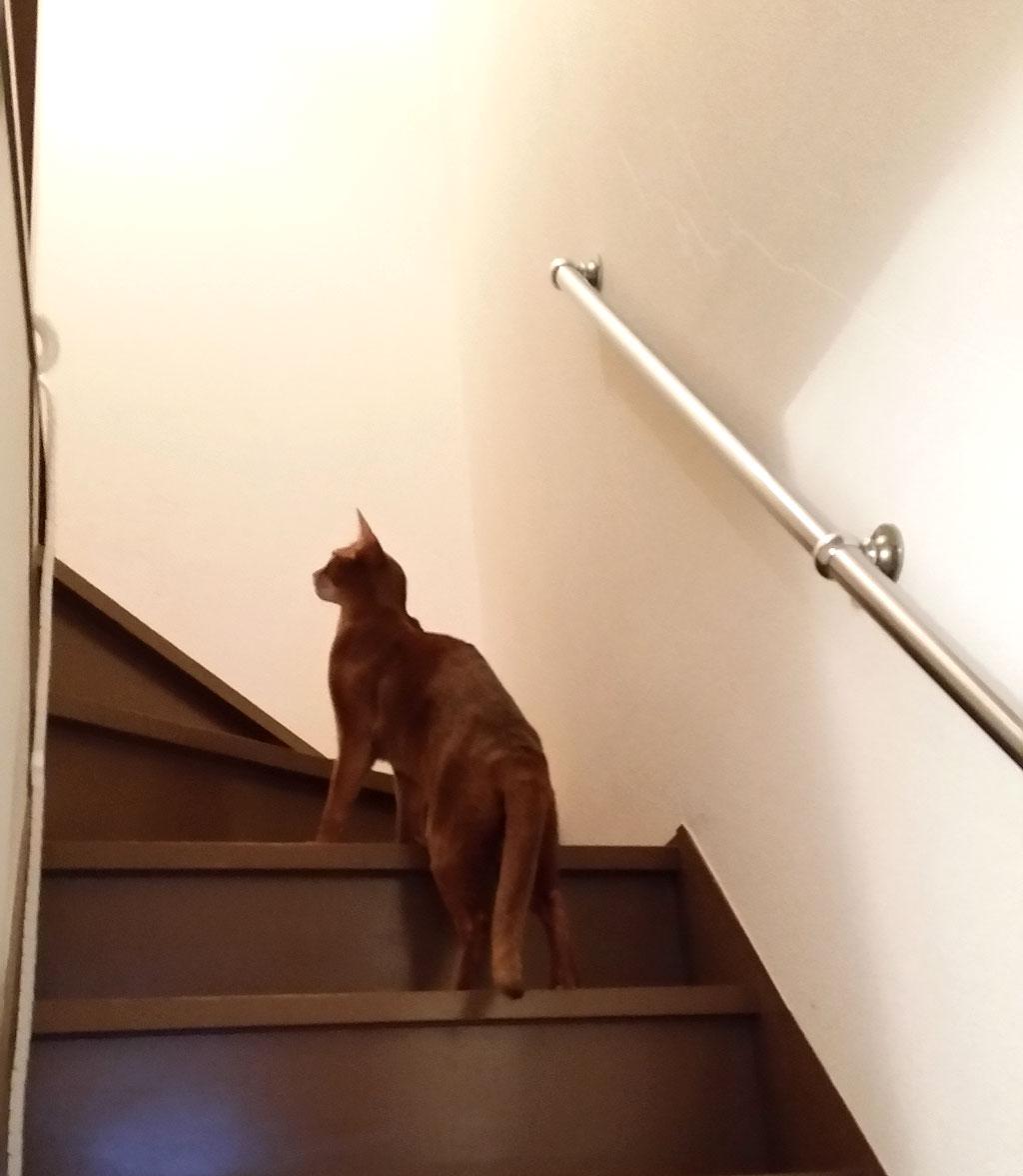 ロシ子が逃げた。